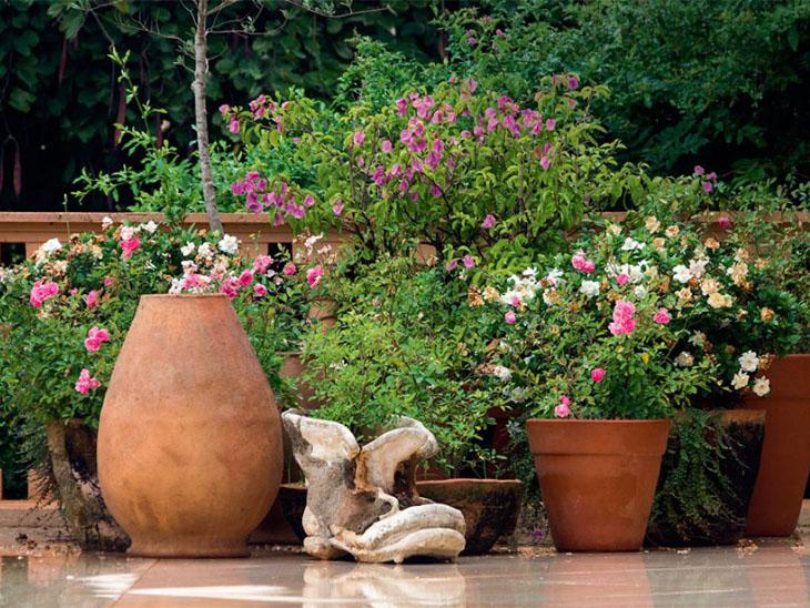 Conheça 101 tipos de flores e espécies para colorir o seu jardim