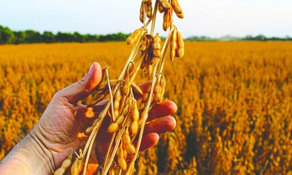 Soja: Brasil pode colher até 166 milhões de toneladas em 2028/2029, diz Fiesp