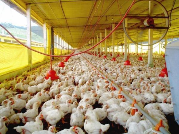 Santa Catarina começa o ano com alta nas exportações de carnes