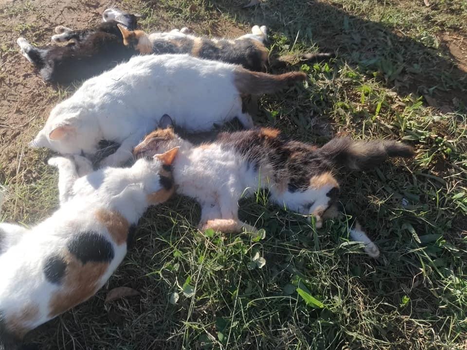 Animais são envenenados em Bandeirante