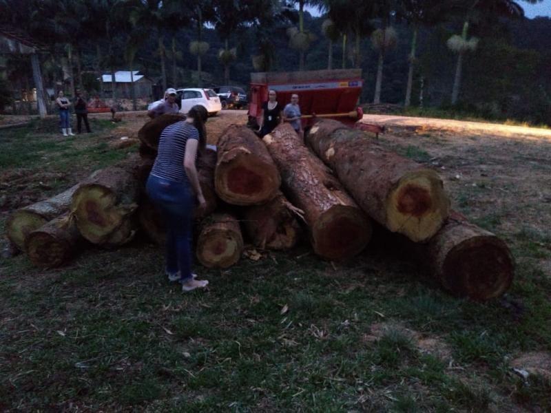 Três homens são detidos por extração ilegal de árvores centenárias no Sul de SC