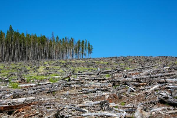 Ministério Público de 15 estados fazem operação para combater desmatamento na Mata Atlântica