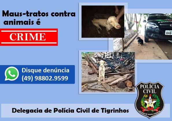 Polícia Civil e ONG Ame Bicho resgatam cães em Tigrinhos