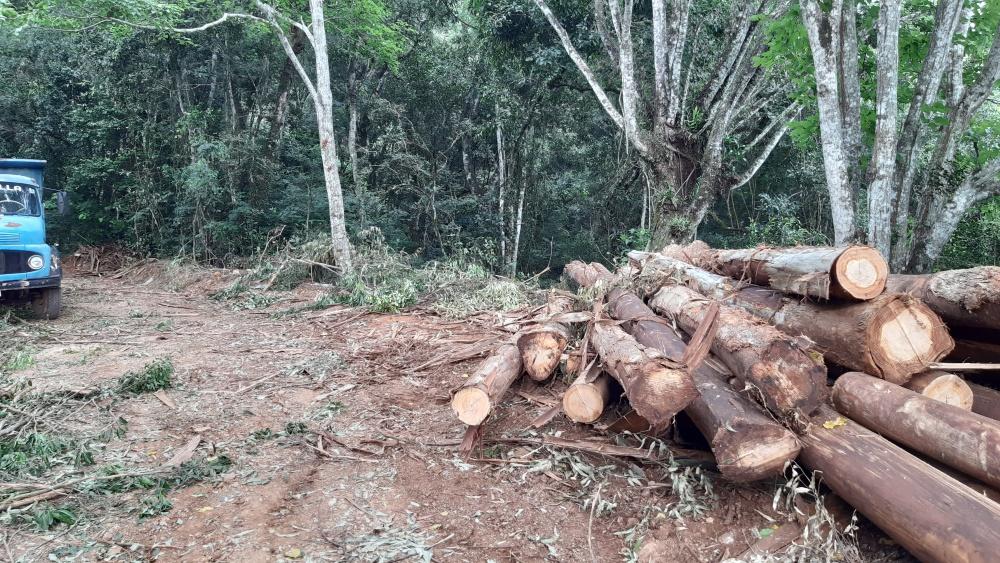 Queda de árvore deixa trabalhador ferido no interior de Bandeirante