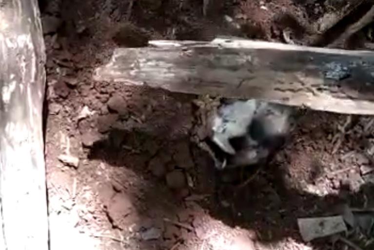 Cão morre ao ser enterrado vivo em Cunha Porã